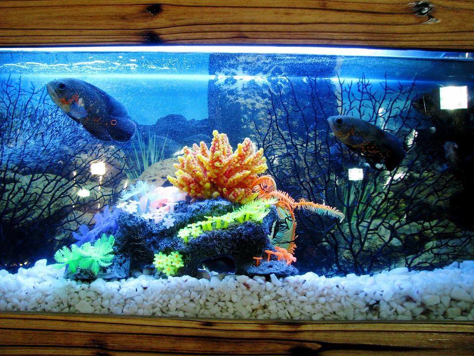 Bear glass custom glass fish tanks bear glass blog Fotos de acuarios decorados
