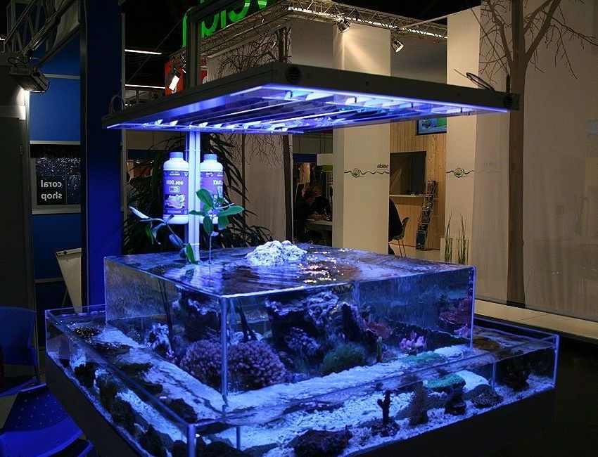 custom-fish-tanks.jpg