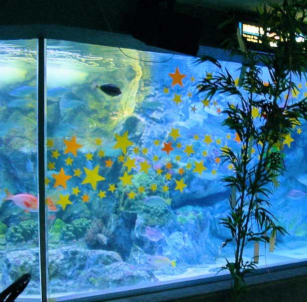 fish-tank